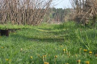 Asparagus Habitat | by Virtualdistortion