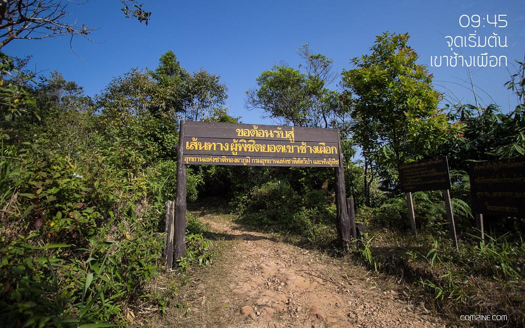 รายละเอียดและข้อมูล เปิดเดินทางเขาช้างเผือก ประจำปี 2562