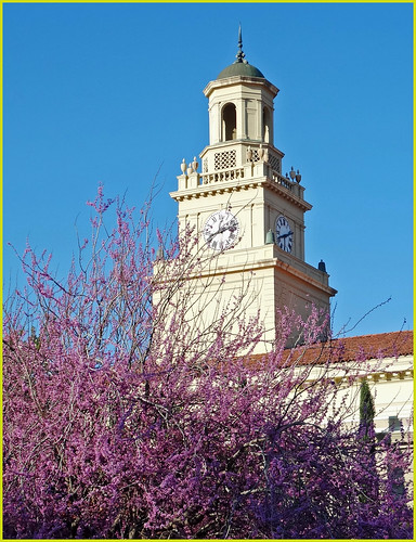 morning sunrise clocktower redlandsca inlandempire universityofredlands dgrahamphoto uofrchapelbelltower redtreeblooms