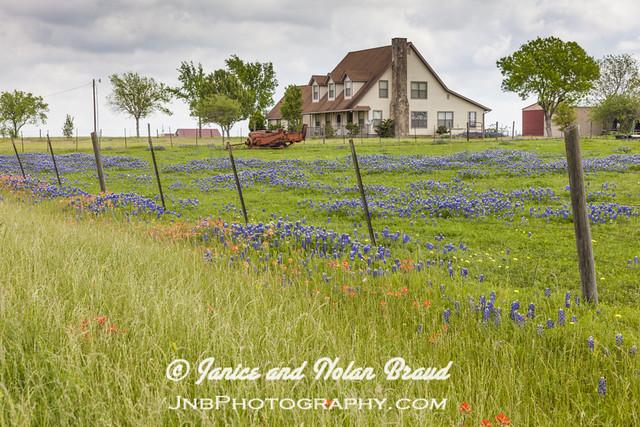 Field of wildflowers JNB087899