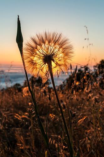 sunset stars airplanes daisy fremontpeak
