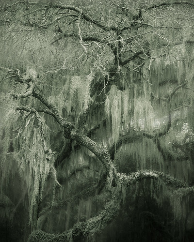 trees summer blackandwhite nature monochrome canon dark georgia landscape moss oak quercus fantasy spanishmoss oaktrees darkart stsimonsisland canon2470mm fortfredericanationalmonument canon7d