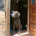 Door way dog