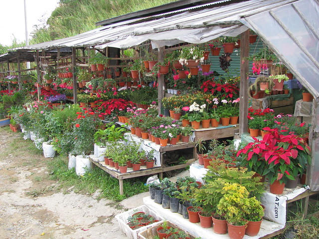 garden plants on display for sale