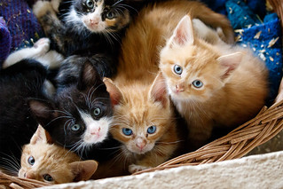 Kittens | by Stig Nygaard