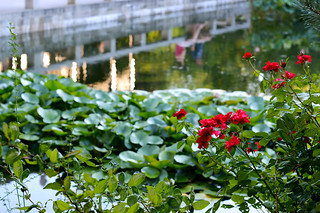 Roses and the Pond | by Buddha-Bellies