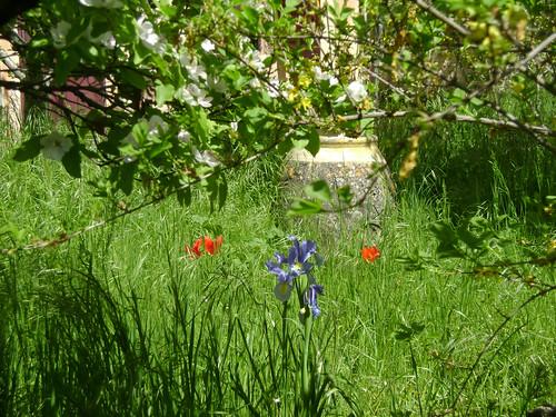 place des sauvageonnes au jardin - Page 3 32957764410_07e613857e