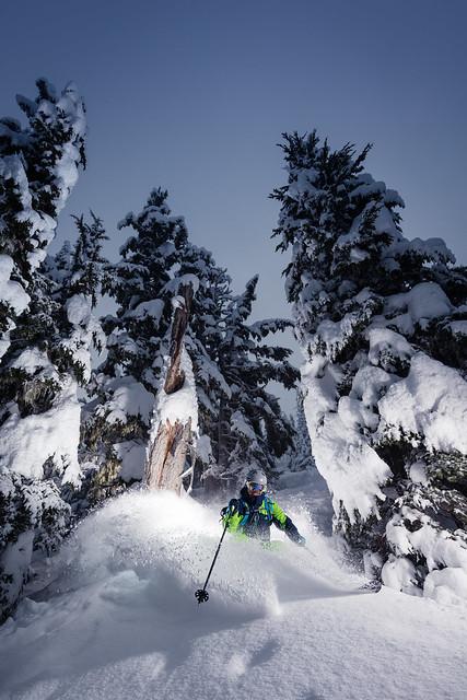 Old Growth Tree Skiing