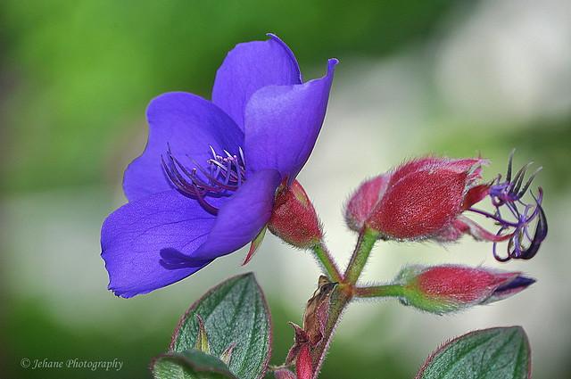 Purple blossom!