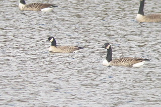 CACG 03 Mill Pond Limestone 21 Oct 2013 Sheehan | by billsheehan