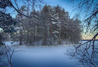 Frosty Morning. Морозное утро.