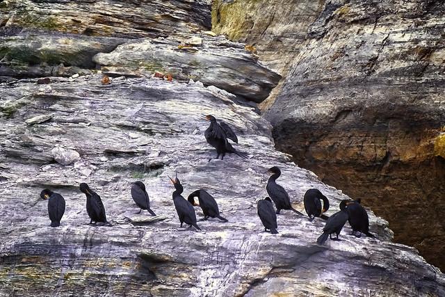 Cliff Birds Calling