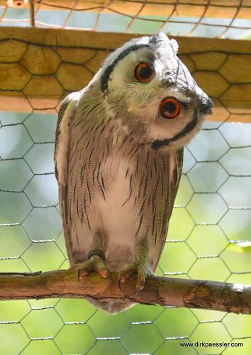 Owl 1 | by Dirk Paessler