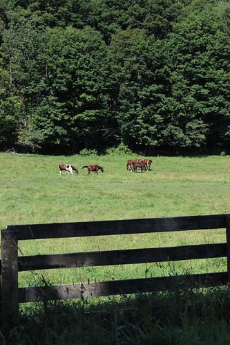 horse canada fence cheval quebec québec qc estrie easterntownships
