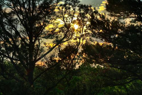 trees sunset sun springs eureka