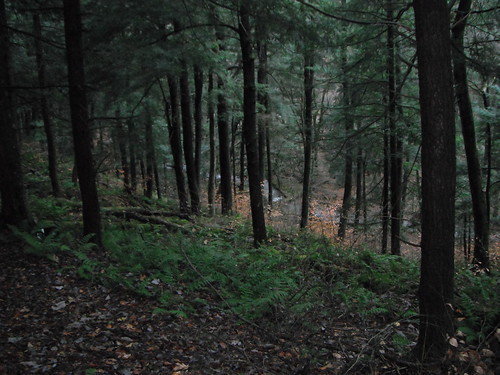 hiking pennsylvania irvine naturalarea warrencounty hikingwithdogs dayhiking pawilds andersrun oldgrowthwhitepine hikingpennsylvania oldgrowthhemlock cornplanterstateforest andersrunnaturalarea andersruntrail generalwilliamirvine