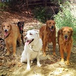 Hiking with Luna, Max, Ivy, Bailey and Babe