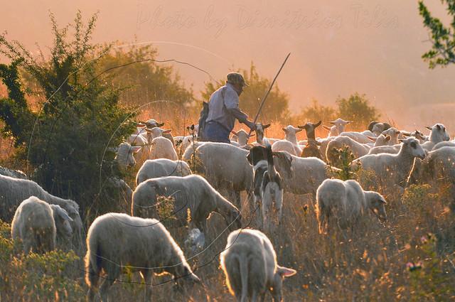 Ποιμήν ποιμένων ποίμνιον Shepherd Shepherd flock