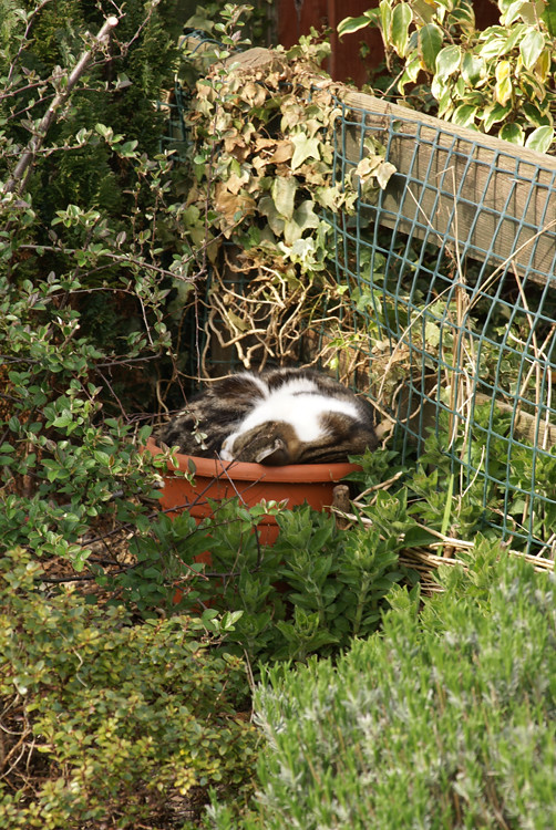 Cat in a Flowerpot