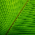 Green 2014