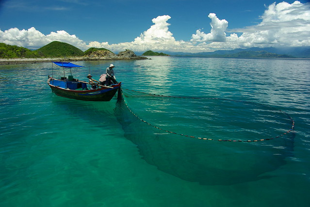 Small-scale purse seine fishers catch cuttlefish in Van Phong Bay, central Vietnam. Photo by David Mills.
