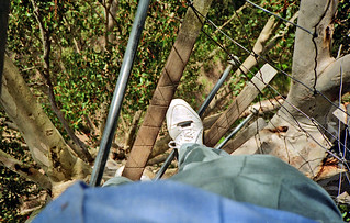 September 1994 - View 180' straight down from the Gloucester Tree spiral wire ladder, near Pemberton, Western Australia