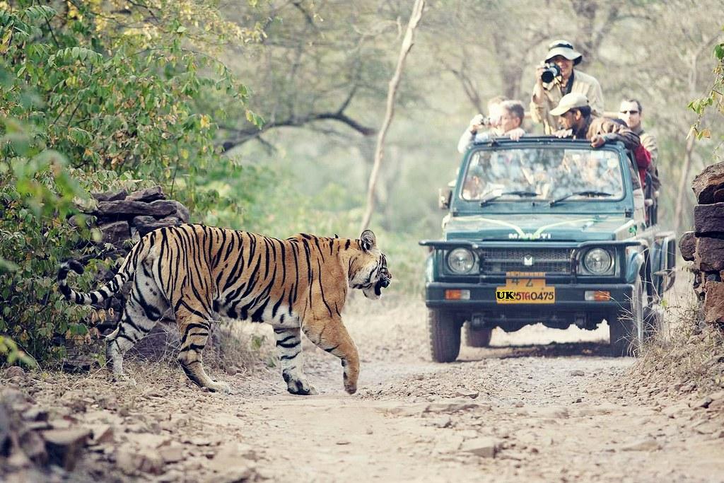 Jungle-Safari-Rishikesh