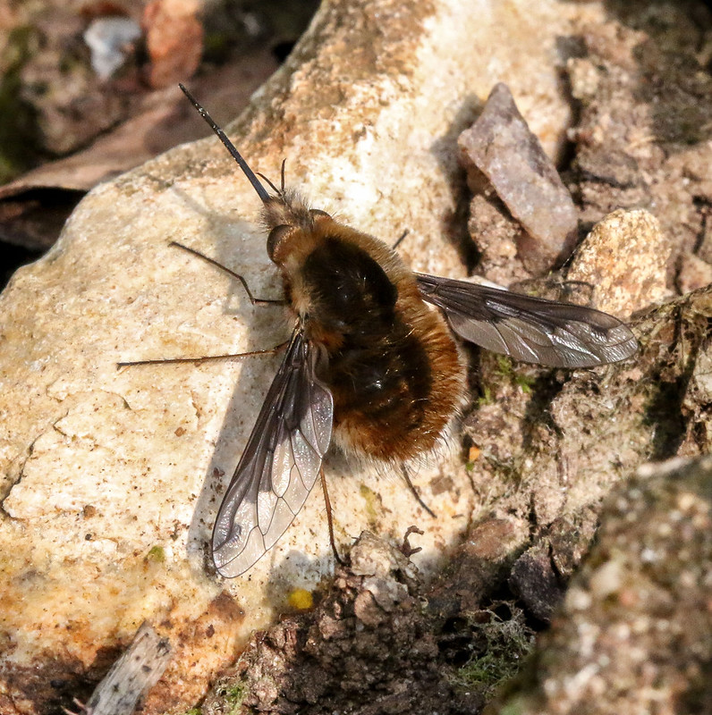 beefly4