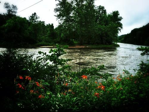 river riverview appalachiantrail daylilies kentct housatonicriver riverrd iphoneography