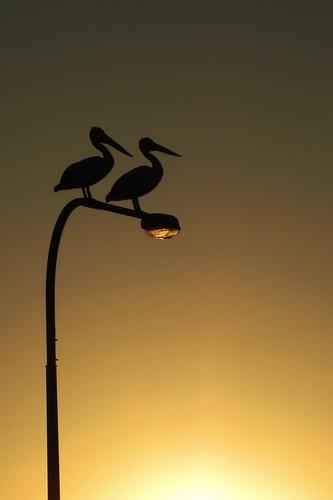 sunset pelican lamppost tedsmoutmemorialbridge flickrandroidapp:filter=none