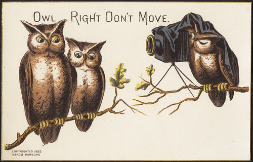 Owl right don't move. [front] | by Boston Public Library