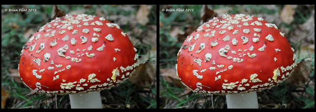 Fly agaric close-up - 3d crossview