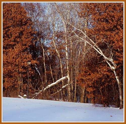 nature landscapessunsetswaterscapes batslair lateautumnlandscapes minnesotaforeststudies