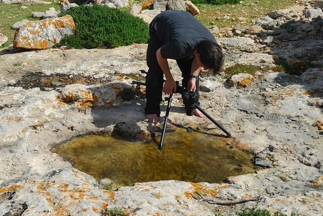 Photographing Callitriche pulchra