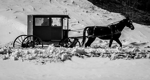 3.17.17 Amish Buggy B & W 1