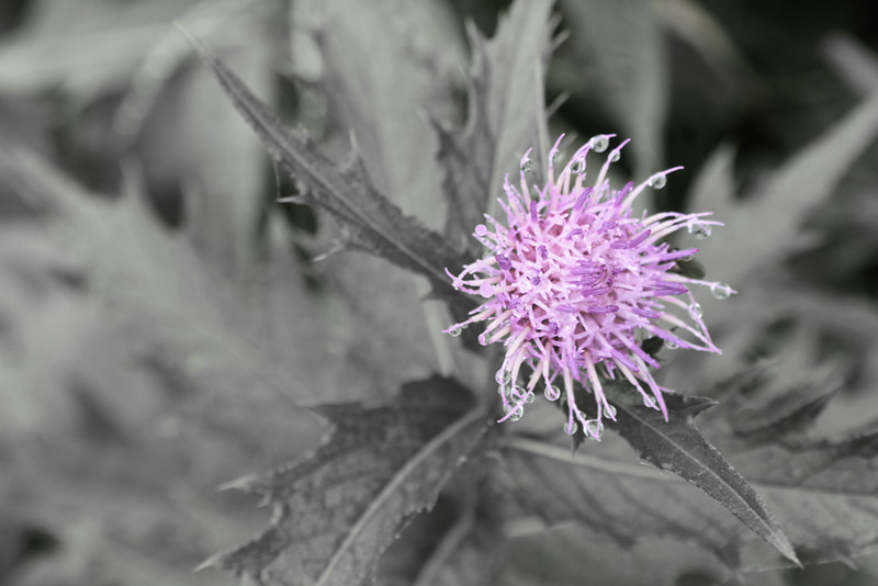 高山植物_19