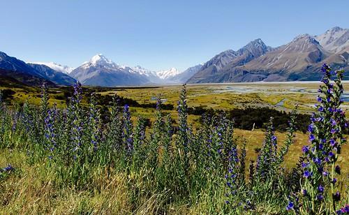 flickrexplore aorakimountcooknationalpark mountains landscape olympusxz2 newzealand southisland mountcook