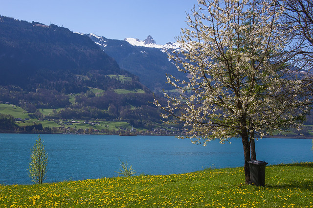 Spring at the Walensee