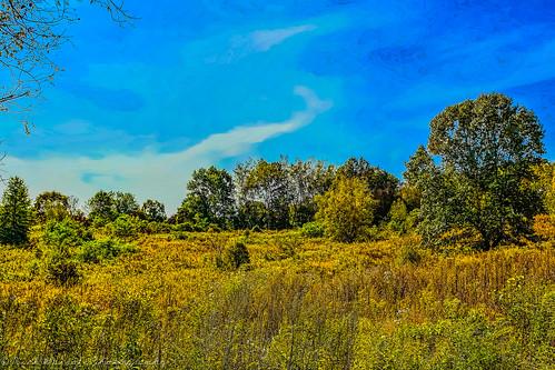trees landscape arty