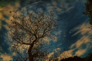 Tree reaching the clouds | by bluesbby