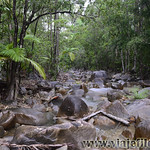 06 Viajefilos en Australia, Eungella NP 030