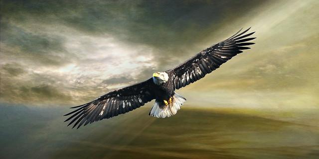 fly like an eagle . . .