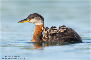 """Mom's water taxi"" | by Greg Schneider (gschneiderphoto.com)"