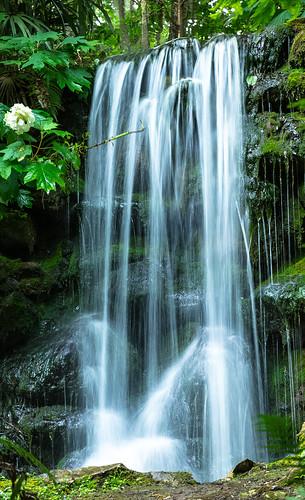 waterfall florida rainbowsprings lovefl