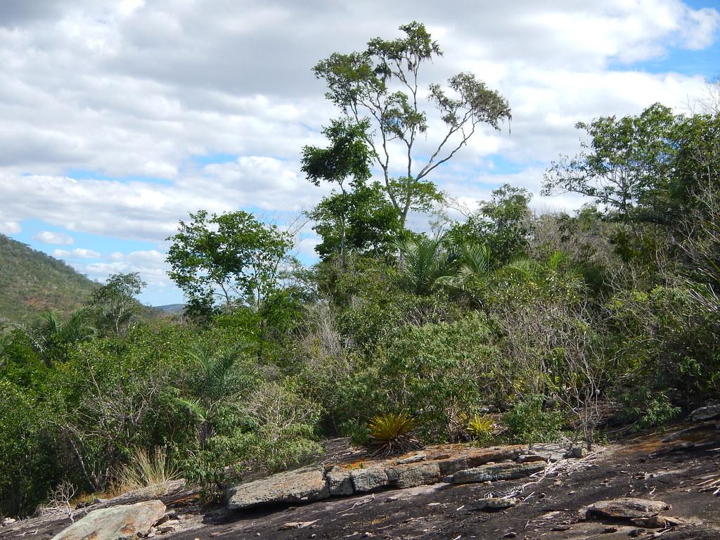 Aechmea aquilega and Goniorrhachis marginata