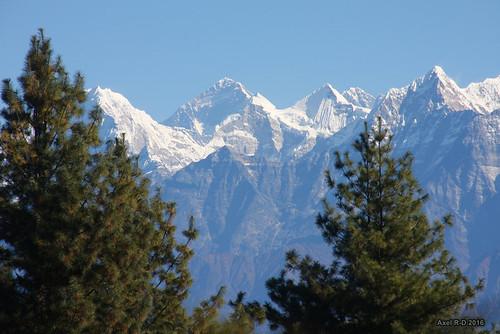 arbre montagnes mounteverest nepal préci pattale solukhumbu thamserku