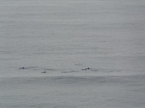 southafrica durban scenery sea ocean dolphin dolphins marine marinemammals bottlenosedolphin blinkagain africa south