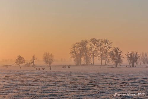 winter mist tree netherlands field fog sunrise frost sheep nederland meadow boom weiland oudewater schapen zonsopkomst