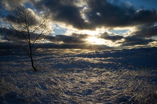winter sunset snow ice nature unitedstates michigan lakemichigan icestorm christmaseve muskegon dunegrass muskegonstatepark
