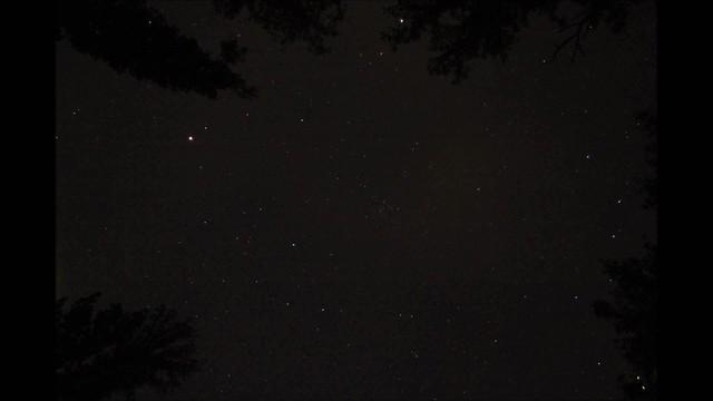 Timelapse, Lampyridae sp., Camelopardalids meteor shower, Van Buren County, Tennessee 1